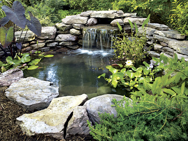 Basics build your own pond how to build a pond Making a pond